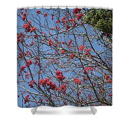 Smokies 8 Shower Curtain by Val Oconnor