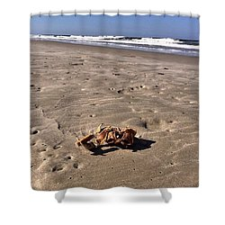 Shower Curtain featuring the photograph Smoking Kills Crab by Lisa Piper