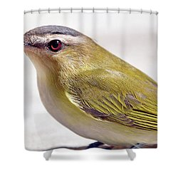 Shower Curtain featuring the photograph Smooth by Glenn Gordon