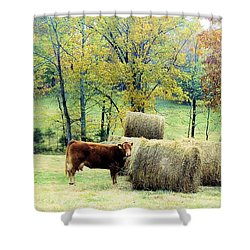 Smorgasbord Shower Curtain by Jan Amiss Photography