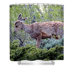 Shower Curtain featuring the photograph Snack Time by Karen Shackles