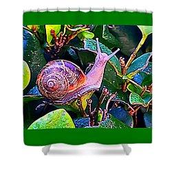 Snail 5 Shower Curtain