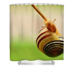 Snail  Shower Curtain by Joe  Ng