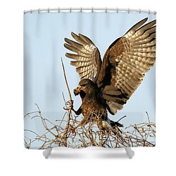 Snail Kite Coming In Shower Curtain