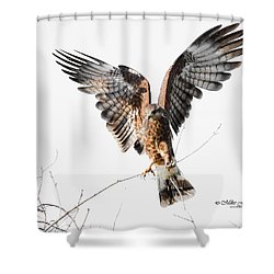 Snail Kite Exposed Shower Curtain