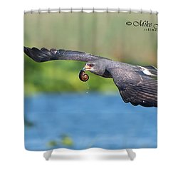 Snail Kite Returning Shower Curtain