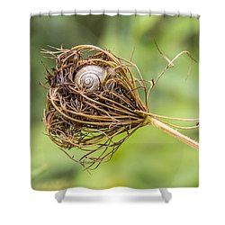 Snail Nestled In Queen Anne's Lace Shower Curtain by Betty Denise