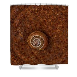 Snail On A Tin Can Shower Curtain