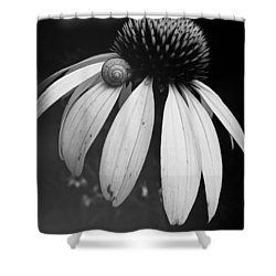 Shower Curtain featuring the photograph Snail by Sharon Jones
