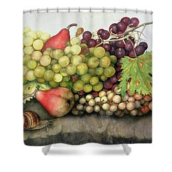Snail With Grapes And Pears Shower Curtain by Giovanna Garzoni