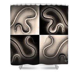 Snake Bones Shower Curtain