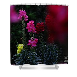 Snapdragon Shower Curtain by Greg Patzer