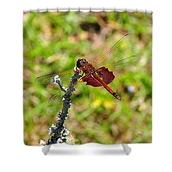 Shower Curtain featuring the photograph Shimmering Saddlebags by Al Powell Photography USA