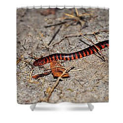 Shower Curtain featuring the photograph Snazzy Snake by Al Powell Photography USA