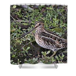 Snipe Hunt Shower Curtain