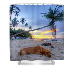 Shower Curtain featuring the photograph Snooze by Yhun Suarez