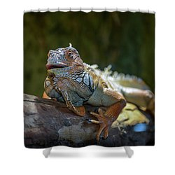 Snoozing Iguana Shower Curtain