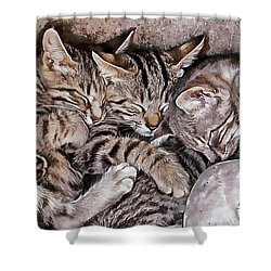 Snoring Purrs Of Kitten Brothers Shower Curtain