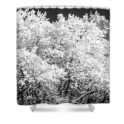 Snow And Frost On Trees In Winter Shower Curtain