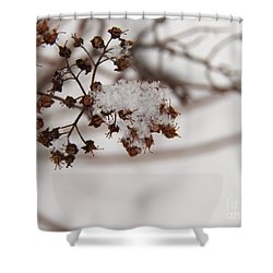 Snow And Growth Shower Curtain