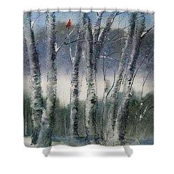 Snow Birch  Shower Curtain