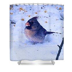 Snow Bird Shower Curtain
