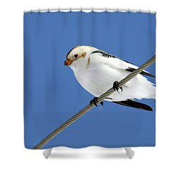 Snow Bunting Shower Curtain by Brook Burling