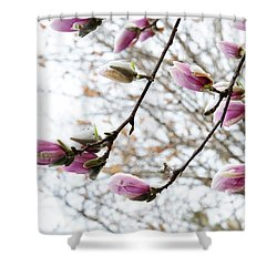 Snow Capped Magnolia Tree Blossoms 2 Shower Curtain by Andee Design