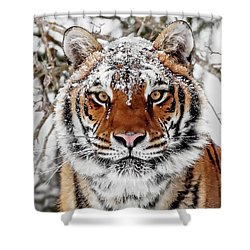 Snow Capped Siberian Shower Curtain
