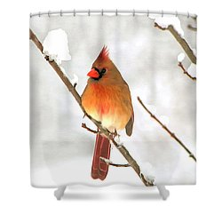Snow Cardinal Shower Curtain by Marion Johnson