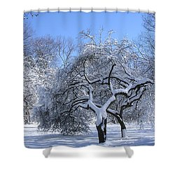 Shower Curtain featuring the photograph Snow-covered Sunlit Apple Trees by Byron Varvarigos
