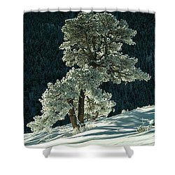 Snow Covered Tree - 9182 Shower Curtain