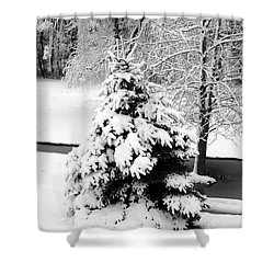 Snow Covered Trees Shower Curtain by Kathleen Struckle