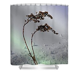 Snow Covered Weeds Shower Curtain by Judy Johnson