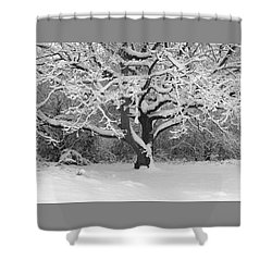 Snow Dusted Tree Shower Curtain