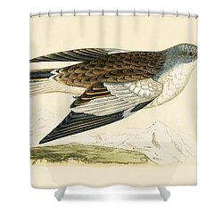 Snow Finch Shower Curtain by English School