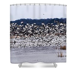 Snow Geese At Squaw Creek Shower Curtain by Edward Peterson