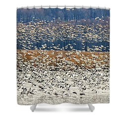 Shower Curtain featuring the photograph Snow Geese At Willow Point by Lois Bryan