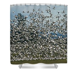 Snow Geese Convention Shower Curtain