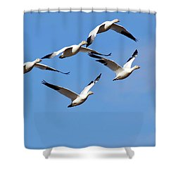 Shower Curtain featuring the photograph Snow Geese Flormation by Elvira Butler
