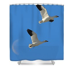 Snow Geese Moon Shower Curtain