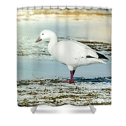 Shower Curtain featuring the photograph Snow Goose - Frozen Field by Robert Frederick