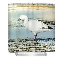 Snow Goose - Frozen Field Shower Curtain by Robert Frederick