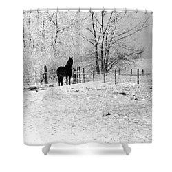 Snow Horse Shower Curtain