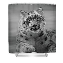Shower Curtain featuring the photograph Snow Leopard  Bw by Sandy Keeton