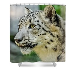 Snow Leopard Portrait Shower Curtain by Yeates Photography