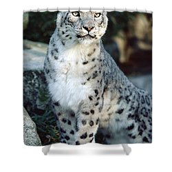 Shower Curtain featuring the photograph Snow Leopard Uncia Uncia Portrait by Gerry Ellis