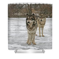Shower Curtain featuring the photograph Snow Mates by Shari Jardina