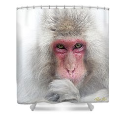 Shower Curtain featuring the photograph Snow Monkey Consideration by Rikk Flohr