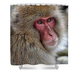 Snow Monkey Shower Curtain
